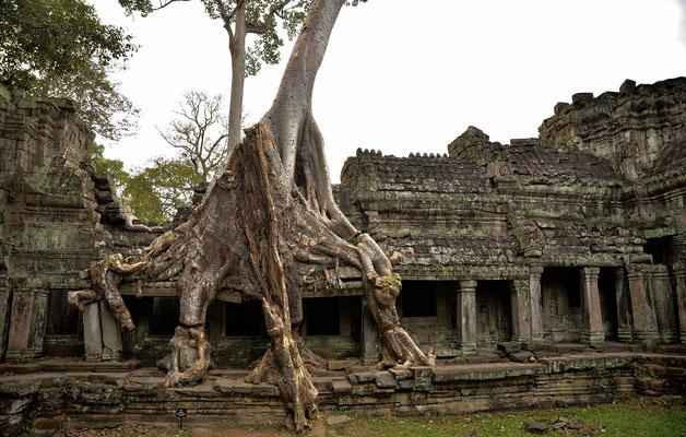Überwachsene Galerie in Preah Khann