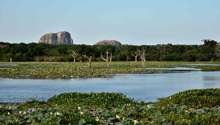 Der Elefant Rock überragt die Seelandschaft