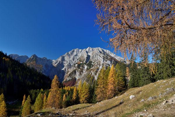 Der Watzmann im goldenen Herbst
