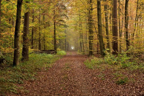 """Herbstliche Stimmung im Wald von """" Klein-Welzheim """" ."""
