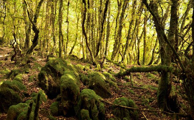 Herbstlicher Wald in der Eifel