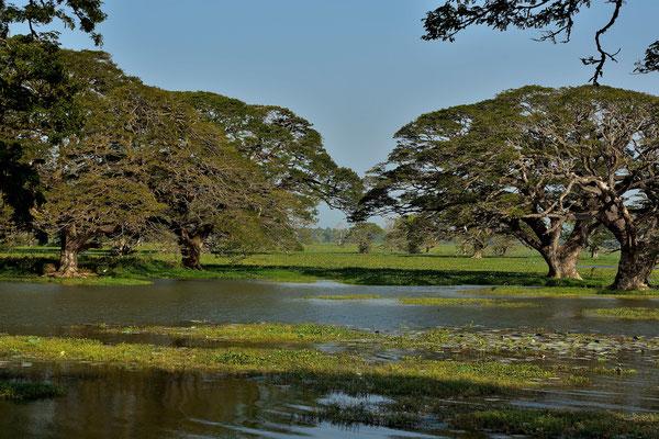 Seenlandschaft bei Tissanaharama