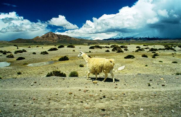 """Im """"Alti Plano"""" an der Grenze zu Peru und Bolivien"""