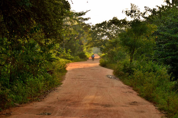 Die Sandpiste führt in den Regenwald, auf Sri Lanka