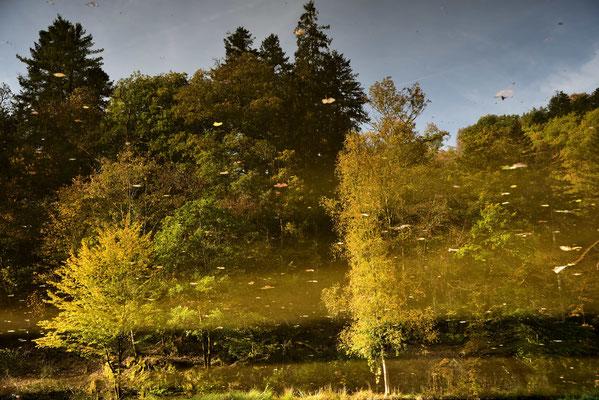 Spiegelung im Burgweiher