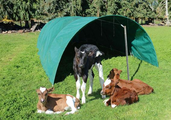 Calf Shelter, New Zealand