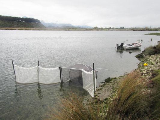 Whitebait Nets, New Zealand