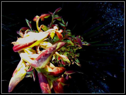 Fleur-essence