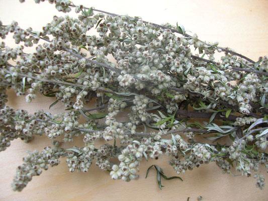 Ganze getrocknete Pflanze mit Blättern und Blüten, nicht gefärbt.