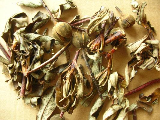 ZWEIGE - Ästchen mit Blättern und Samenkapseln