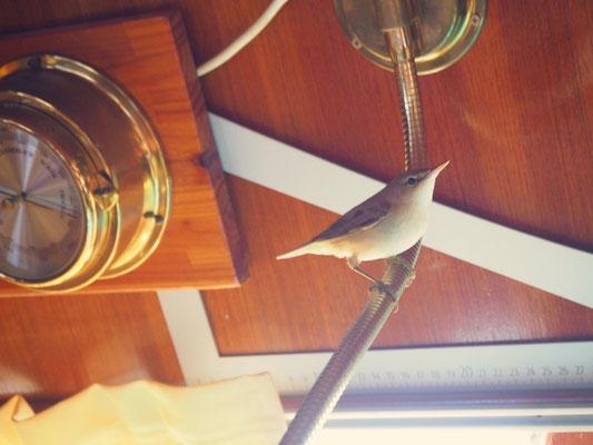 Vogel an Bord