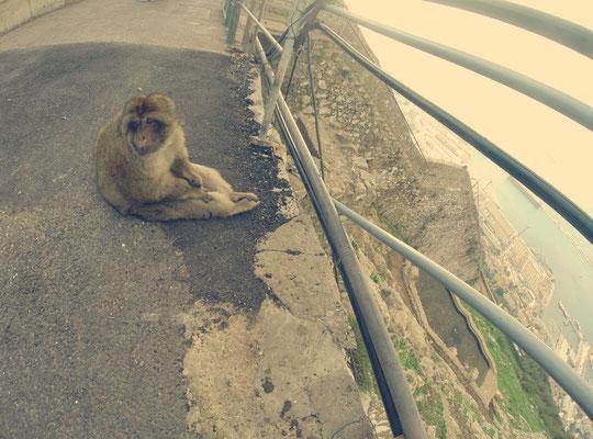 Gibraltar und ein Affe