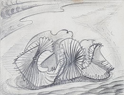 Koraalbloem, studie, (Parijs, 1938), potlood, 12x15 cm