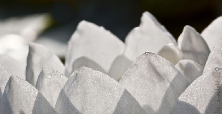 hauchzartes Weiß