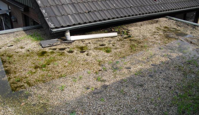 Durch Regelmäßige Wartung bleibt Ihr Dach Dicht und Sauber