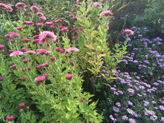 Oma Mielchens Garten