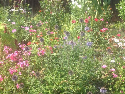 Oma Mielchens wilder Garten im Spätsommer