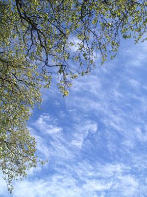 Der Himmel über dem Alten Land