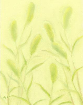 エノコログサ(植物シリーズ)