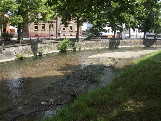 An der Kiesinsel/Böschung des Emsbaches in der Dauborner Straße  holen die Mehlschwalben das Material zum Nestbau.