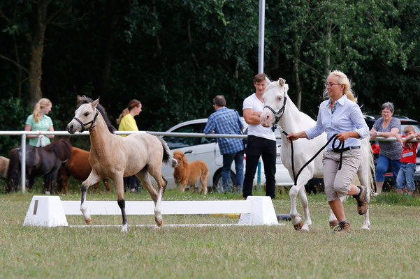 Fohlenschau und Eintragung Ponyverband Hannover, Fohlenprämie