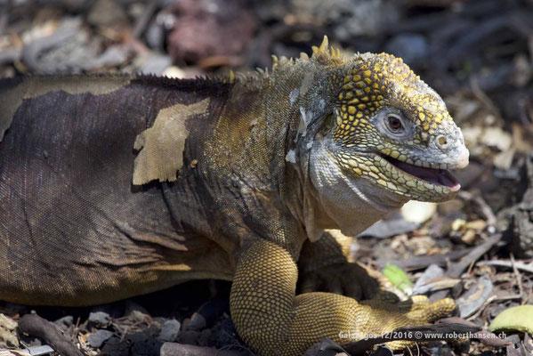 Galapagos, Dezember 2016 © Robert Hansen