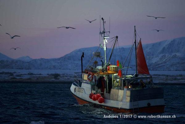 Ein Fischerboot im Andfjord - 1/2017 © Robert Hansen