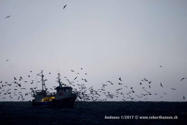 Möven warten auf Fischabfälle - 1/2017 © Robert Hansen