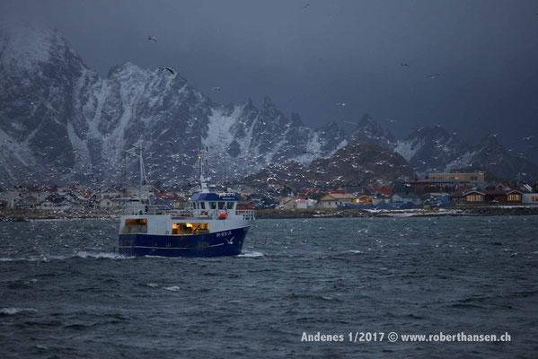 Rükfahrt zum Hafen von Andenes - 1/2017 © Robert Hansen