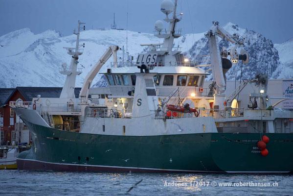 Fischtrawler im Hafen von Andenes - 1/2017 © Robert Hansen