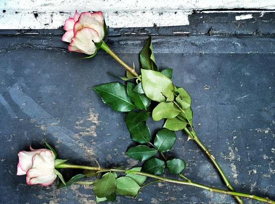 ...Rosen auf der Bühne...