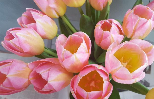 ...die Farben leuchten frisch rosa und gelb...