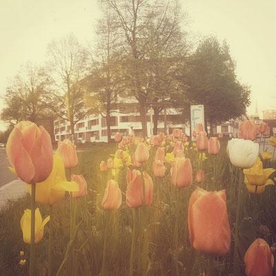 Nostalgie: Sich von den Tulpen am Straßenrand vor der alten Haustür verabschieden...