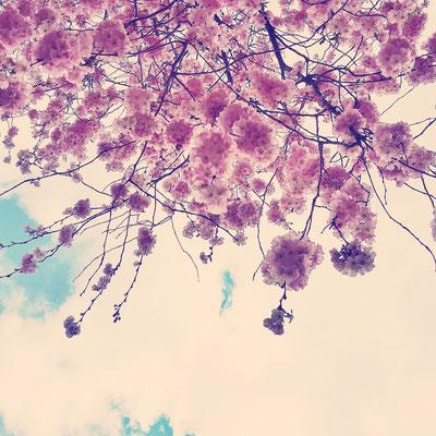 Frühlingsgefühle: Wen machen Kirschblüten eigentlich nicht glücklich?