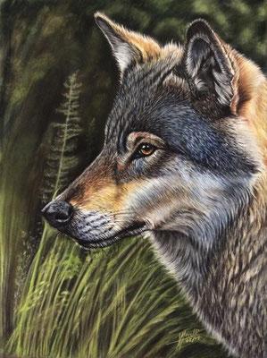 Lobo Ibérico - Pastel - 30x40