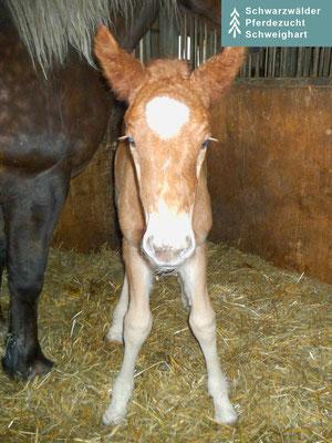 Milka S  (kurz nach der Geburt)