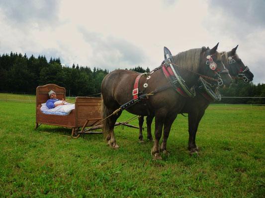 Tag des Pferdes 2013 - Bettschlitten