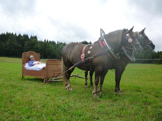 Franzi (vorne) mit Jorett am Bettschlitten beim Tag des Pferdes 2013