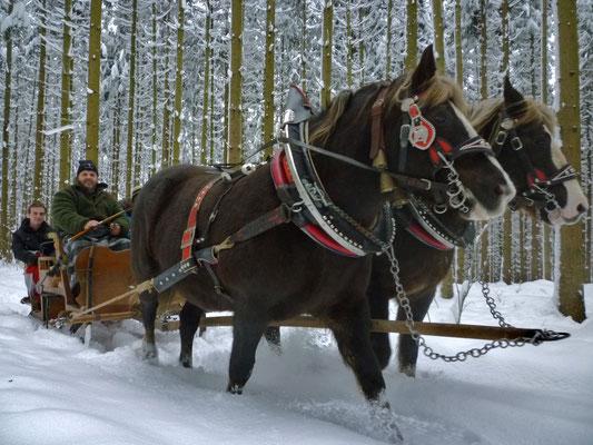 Schlittenausfahrt Silvester 2014