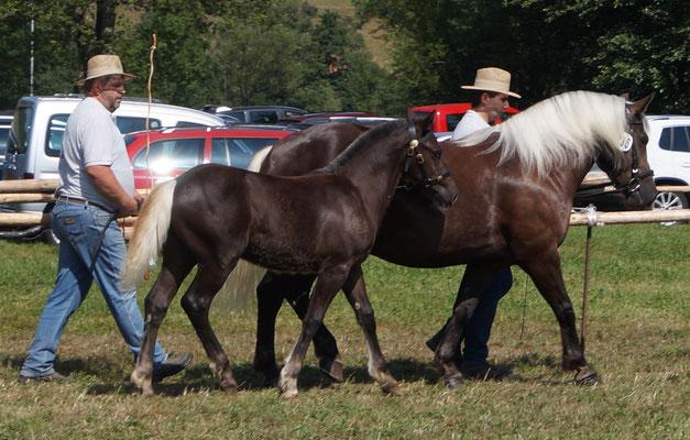 Jasira Daisy S bei der Fohlenschau Kohlenbach 2015