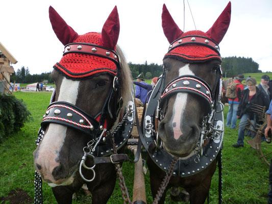 Unsere Pferde hatten sichtlich ihre Freude am bunten Festtreiben