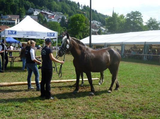 Meera bei der Kohlenbacher Fohlenschau am 10.08.13
