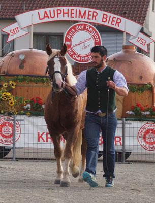 Mila S bei der Verbandspferdeschau in Laupheim am 13.10.16