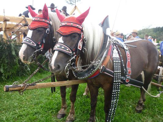 Unsere Pferde präsentierten sich mit neuem Geschirr