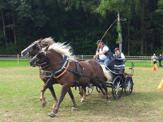 25.08.13: Tag des Pferdes
