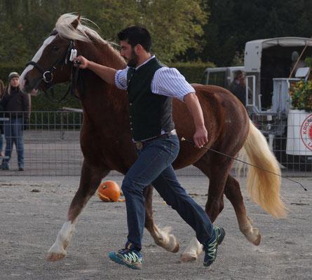 Mila S, Klassensieger 2-jg. Verbandspferdeschau Laupheim 2016