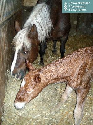 Milka S (kurz nach der Geburt) und Meera