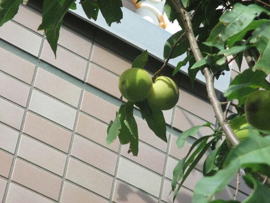 令和元年8月29日 施設正面側にて 撮影