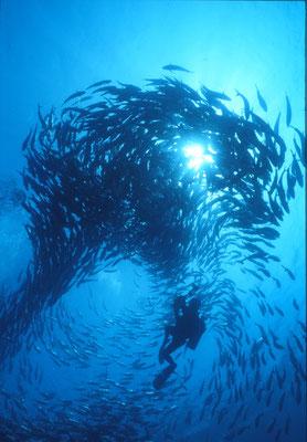 1998年度マリンフォトエキスポ水中写真展  入選  「シルエット」 広瀬 晴夫  ニコノスⅤ UW15mm f8  1/60 YS-50×2 RVP 水深20m  撮影地:フィリピン、バリカサグ