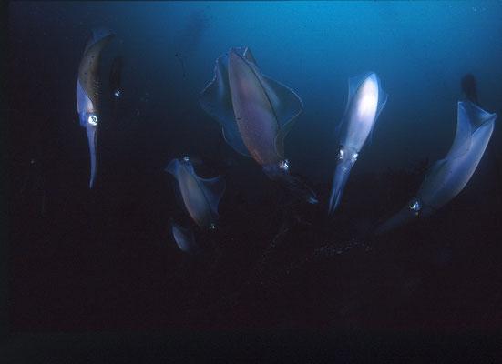 地球の海フォトコンテスト2012  地球環境部門 入選 「ホバーリング」 広瀬 晴夫 ニコンF4 16mmフィッシュアイ   水深20m  撮影地:大瀬崎